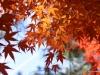 Fall 2008 033 Japanese Garden, Manito Park