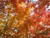 Fall 2008 035 Japanese Garden, Manito Park