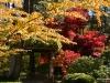 Fall 2008 036 Japanese Garden, Manito Park