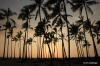 """Sunset, """"Place of Refuge"""", the Big Island of Hawaii. Palm trees in silhouette."""
