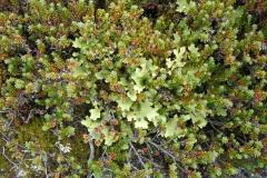 Vegetation in Ainsworth Bay, Tierra del Fuego