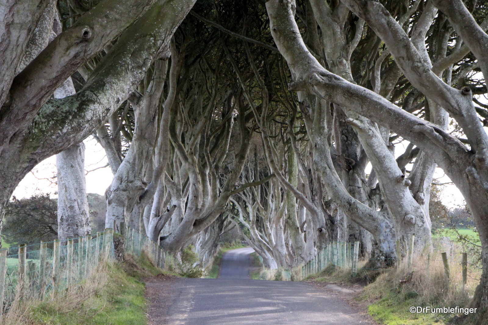 Dark Hedges, Antrim County