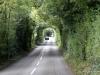 Road near Dark Hedges