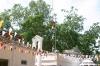 Anuradhapura -- Sacred Bodhi tree