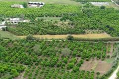 Olive groves near Arcos de la Frontera, Spain