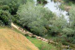 Shepherd viewed from Arcos de la Frontera, Spain
