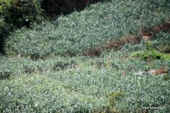 Vegetables grown in Nuwara Eliya
