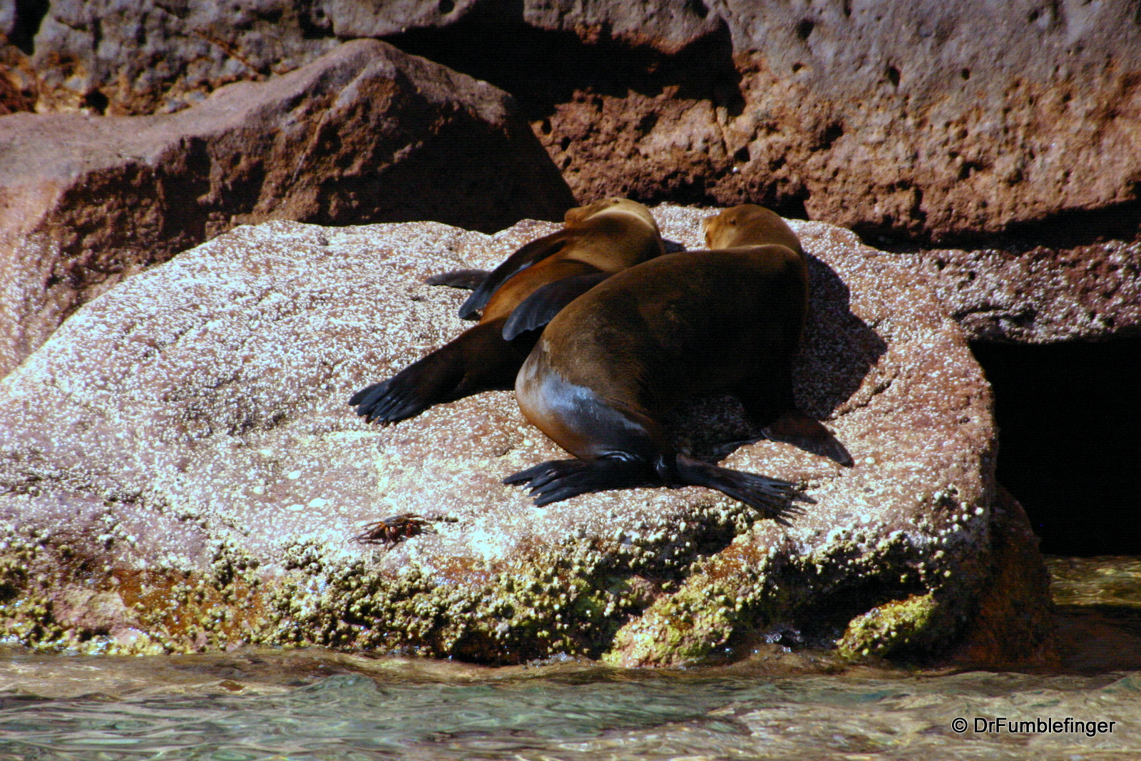 Sea Lion Rookery, Los Islotes