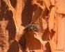 Osprey nest, Isla Espiritu Santo