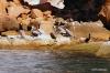Pelicans, Isla Espiritu Santo