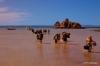 Wading onto shore, Isla Espiritu Santo