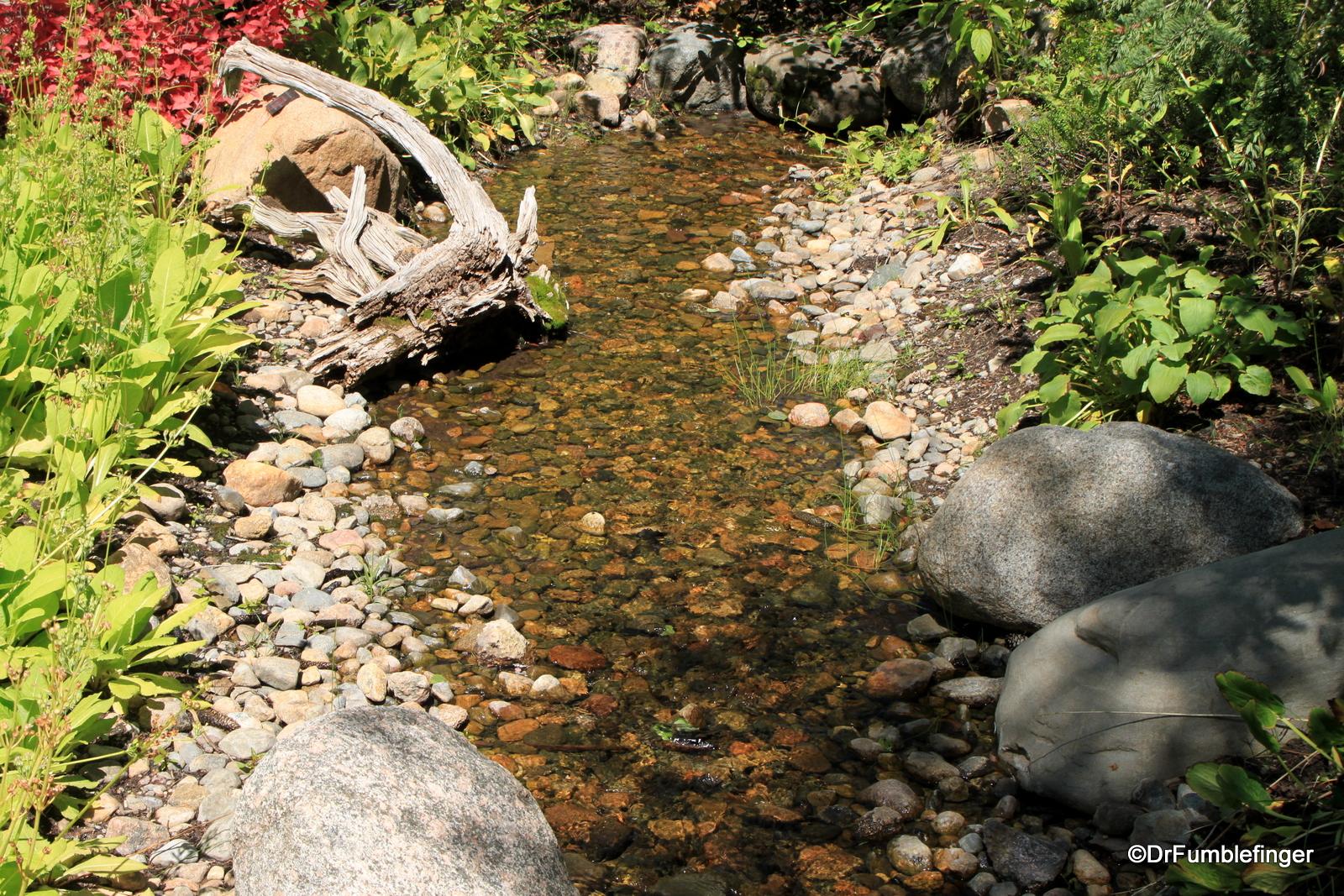 A Stroll through the Betty Ford Alpine Garden, Vail, Colorado ...