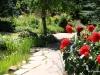 Mountain Perennials