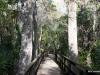 Big Cypress Bend Boardwalk