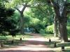 Nice path, Jardin Botanica, Buenos Aires