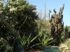 Cacti, Jardin Botanica, Buenos Aires