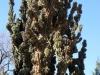 Cactus, Jardin Botanica, Buenos Aires
