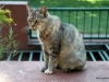 Feral cat, Jardin Botanica, Buenos Aires