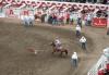Calf roping, Calgary Stampede