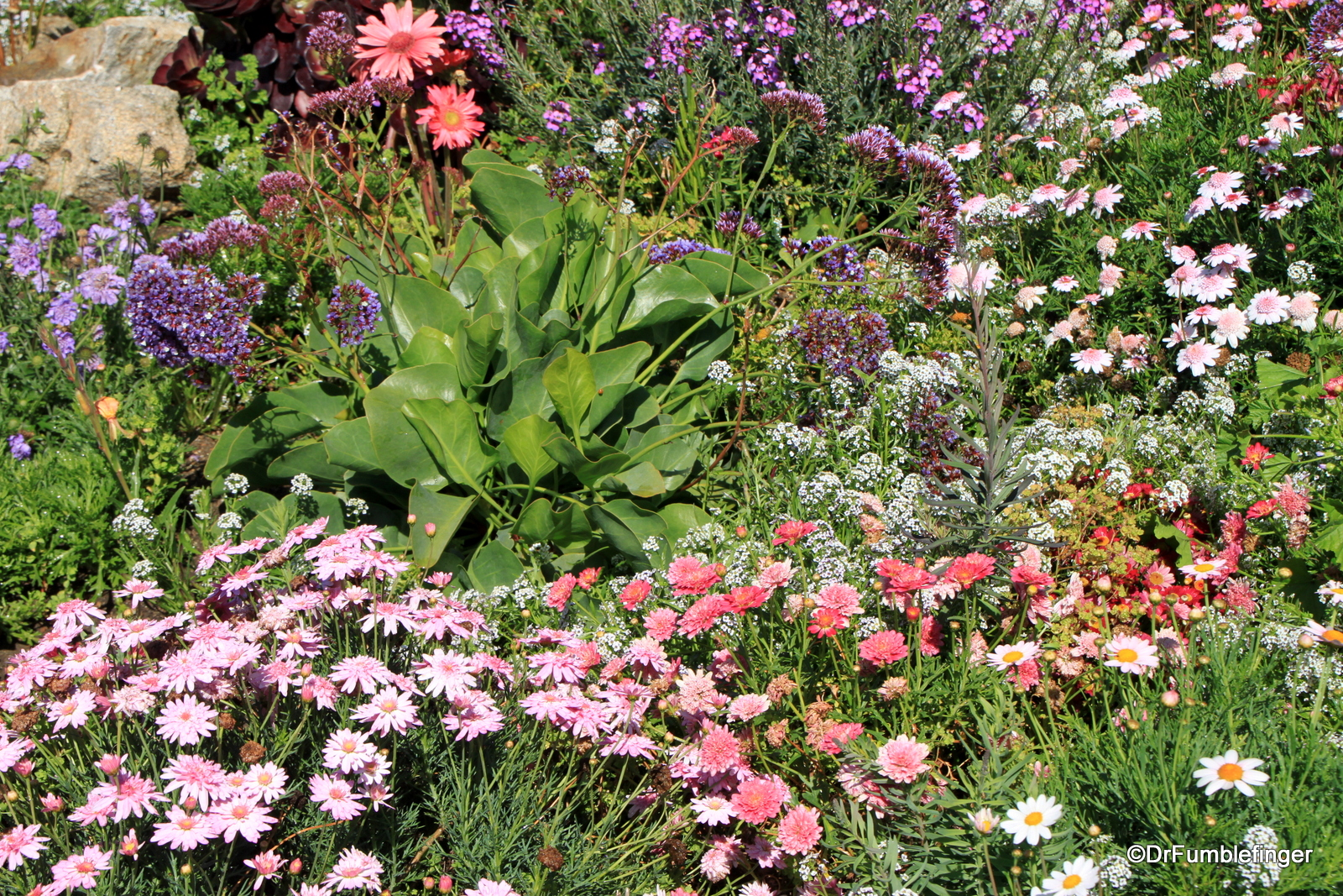 Flowers, Steinbeck plaza, Cannery Row
