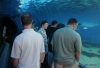 Walk through tank -- Maui Ocean Center