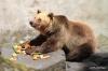 Cesky Krumlov bear pit