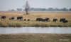 Elephants walking in Namibia