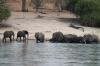 Elephants bathing, Chobe River