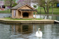 Swan, Lake Honor, College of the Ozarks, Branson