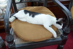Cat resting in the Museum collection, Gangaramaya Temple, Colombo