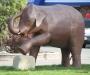 "Statue of ""Ed"" the Elephant"