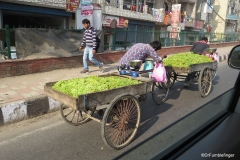 Delhi street scene. Grape vendors going uphill