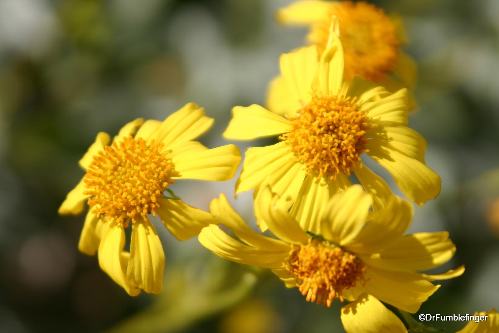 Wildflowers, Tahquitz Canyon, California