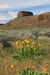 The Channeled Scablands, Central Washington