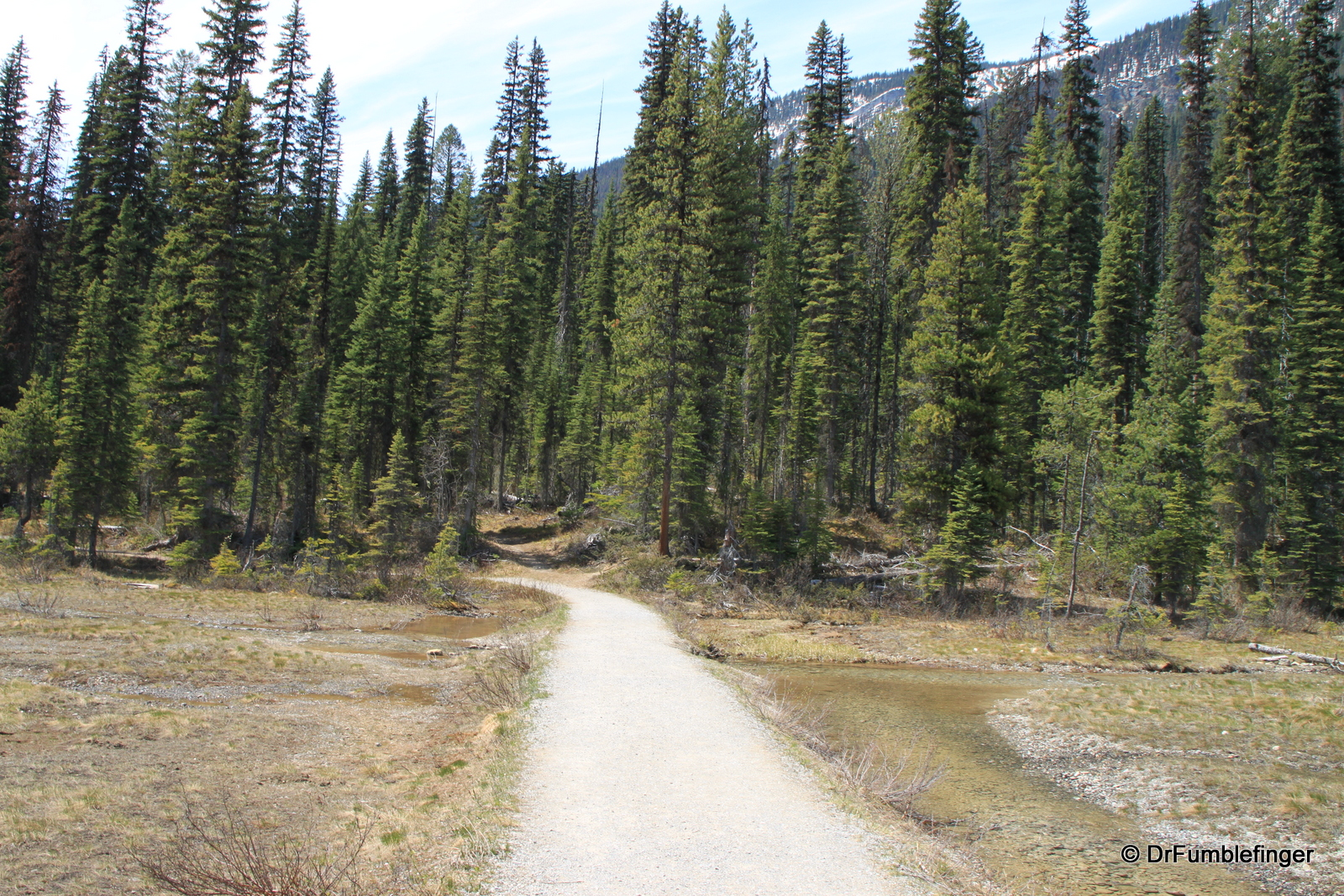 Emerald Lake, trail on North Shore