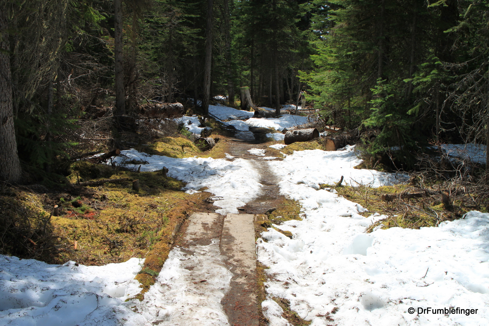 Emerald Lake, snowy trail on East Shore