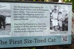 Six-toed cat,  Ernest Hemingway Home, Key West