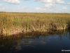 Everglades -- the River of Grass