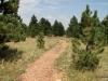 Flatiron Vista Loop Trail, through ponderosa pine forest