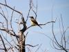 Bird, Flatiron Vista Loop Trail