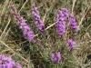 Wildflowers, Flatiron Vista Loop Trail