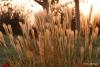 Getty Center -- Grass in Central Garden