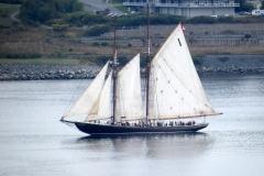 View of Bluenose II sailing in Halifax Harbor, viewed from the Citadel