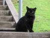 Feral cat, Hapuna Beach Prince Resort