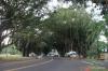 Hilo, Banyon Drive