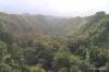 Rainforest, Hamakua Coast