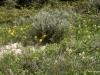 Path and wildflowers, Horseshoe Canyon