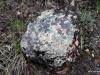 Lichens on a rock, Horseshoe Canyon