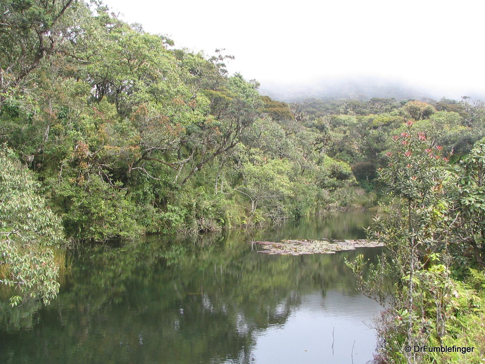 Horton Plains -- pond