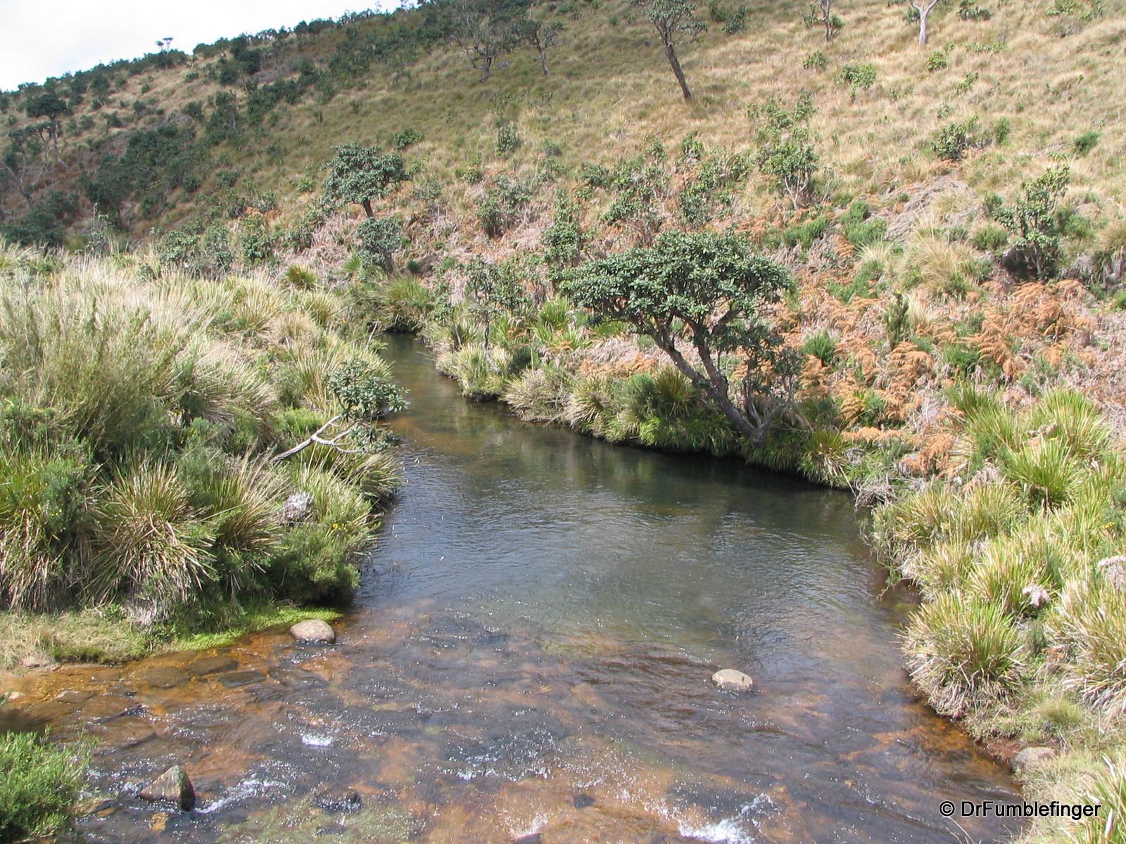 Horton Plains -- Creek